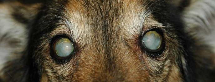 Der geriatrische Augenpatient