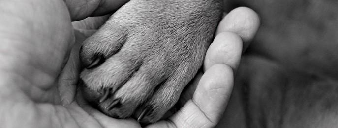 Euthanasie bei Hund und Katze