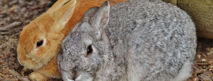 Durchfall beim Kaninchen