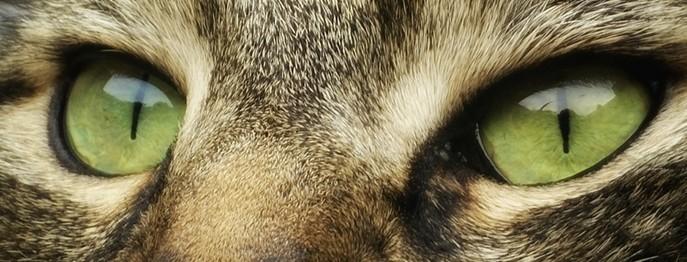 Augenuntersuchung beim Kleintier
