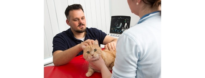Der feline Herzpatient