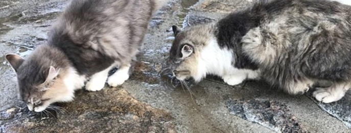 Leitsymptom PU/PD beim Kleintier