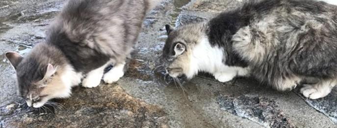 Feliner Hyperaldosteronismus