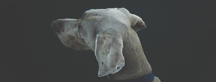 Dermatologische Fälle: Otitis beim Hund