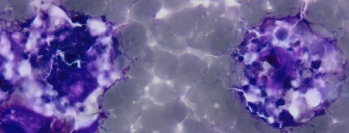 Zytologie beim Kleintier 3