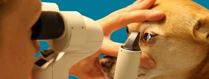 Augenheilkunde für TFA
