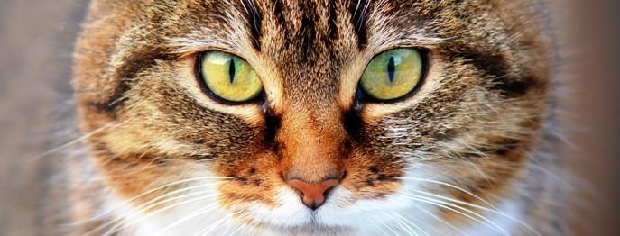 Endokrinologie Katze 2