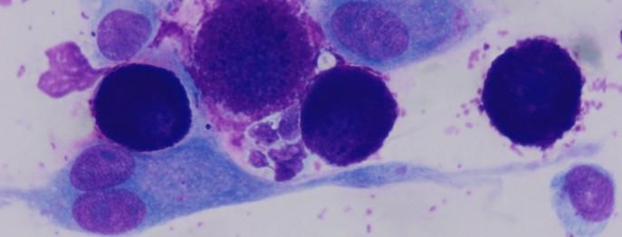Zytologie beim Kleintier 1